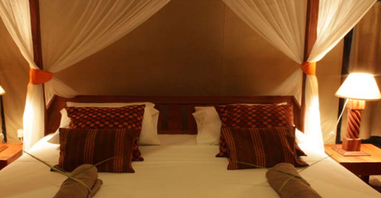 11 day Safari & beach Honeymoon